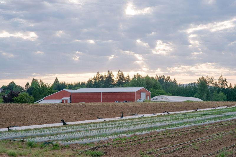 Headwaters Farm fields