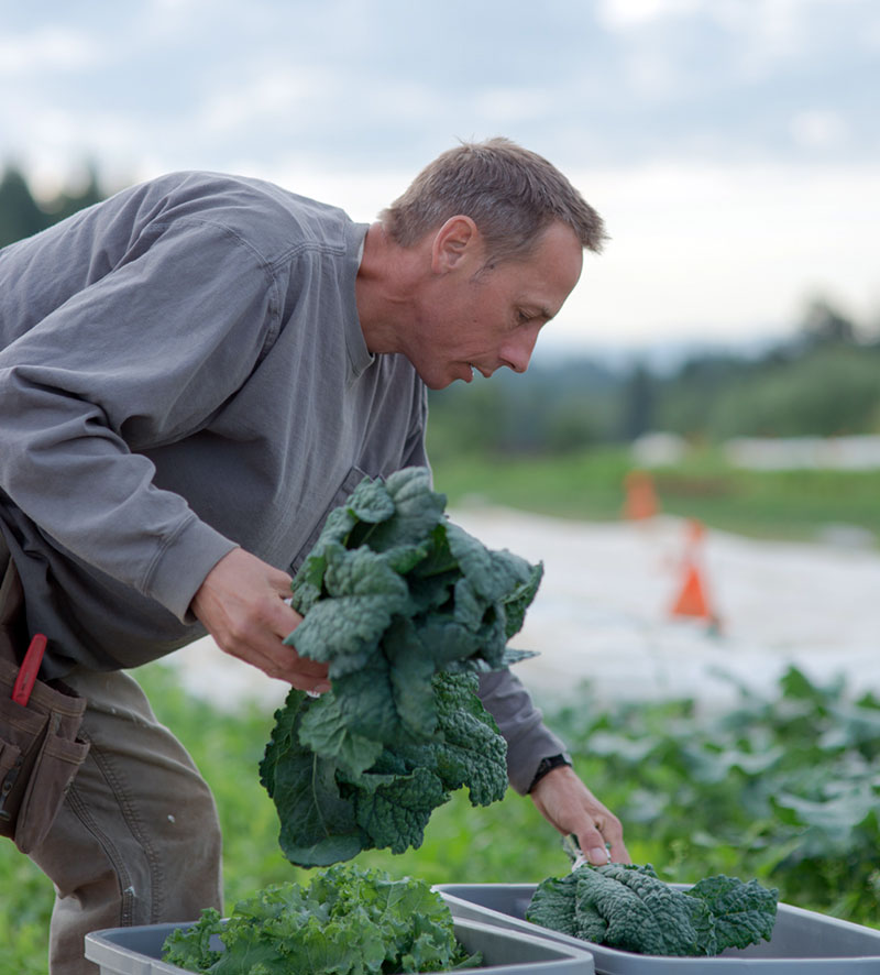 Rick puts away just-harvested produce from his plot at Headwaters Farm