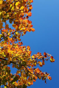 Leave the leaves! Leaf litter provides habitat for pollinators and many beneficial insects.