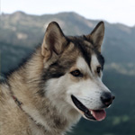 Timber : Outdoor Excursion Specialist