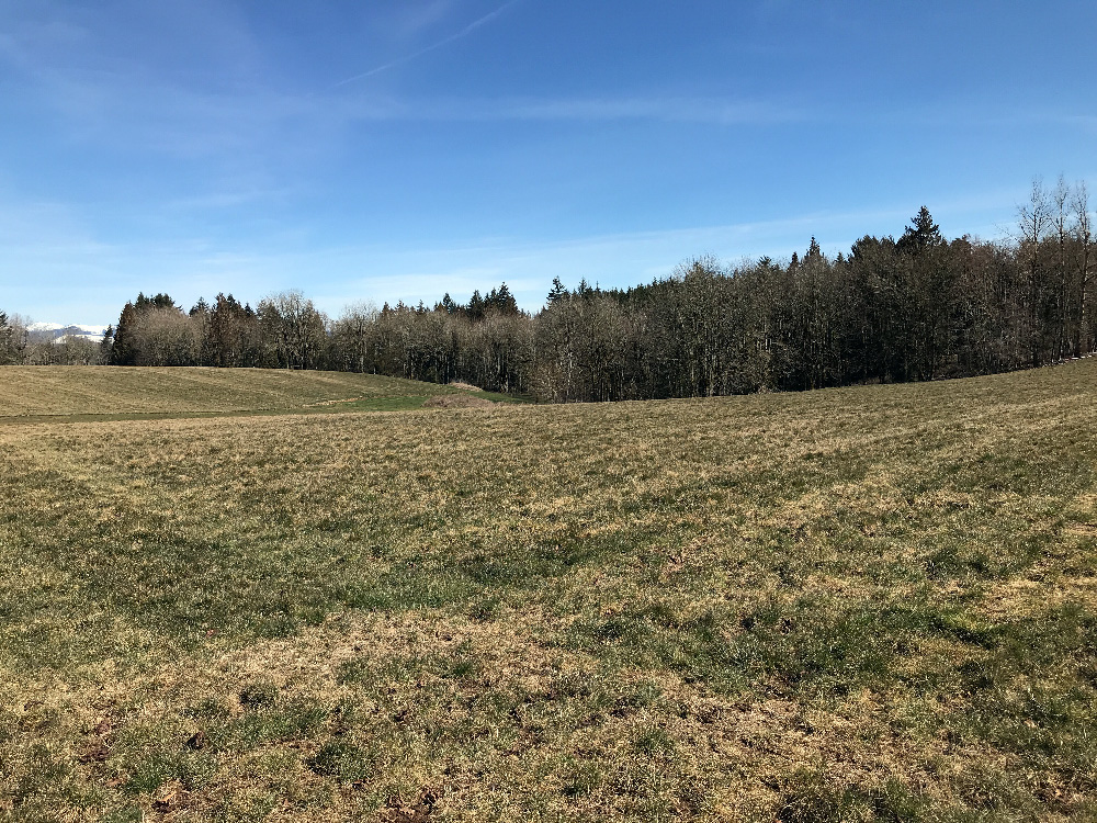 Fields and forest at Oxbow Farm