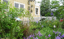 Large rain gardens in bloom at EMSWCD's Naturescaped Yard