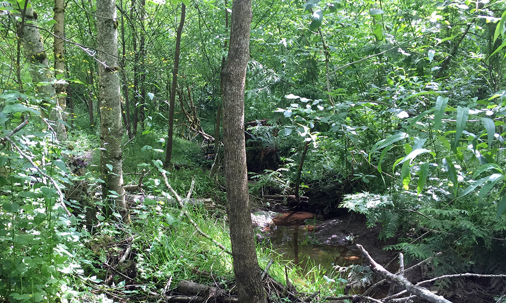 The North Fork of Johnson Creek passes through the Dianna Pope Natural Area