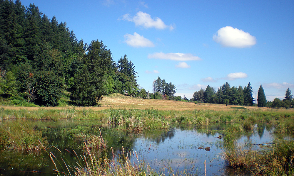 Meadow at Grant Butte