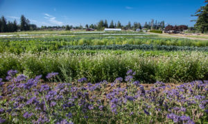 Rows of crops and flowers at Headwaters Farm