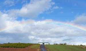 a rainbow over Mainstem Farm