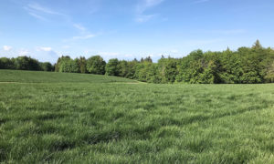 The fields at Oxbow Farm