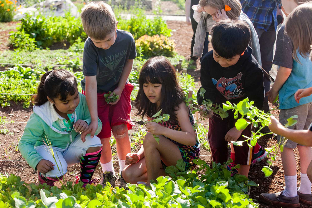Children harvest vegetables from garden beds