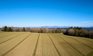 aerial of fields at Oxbow Farm