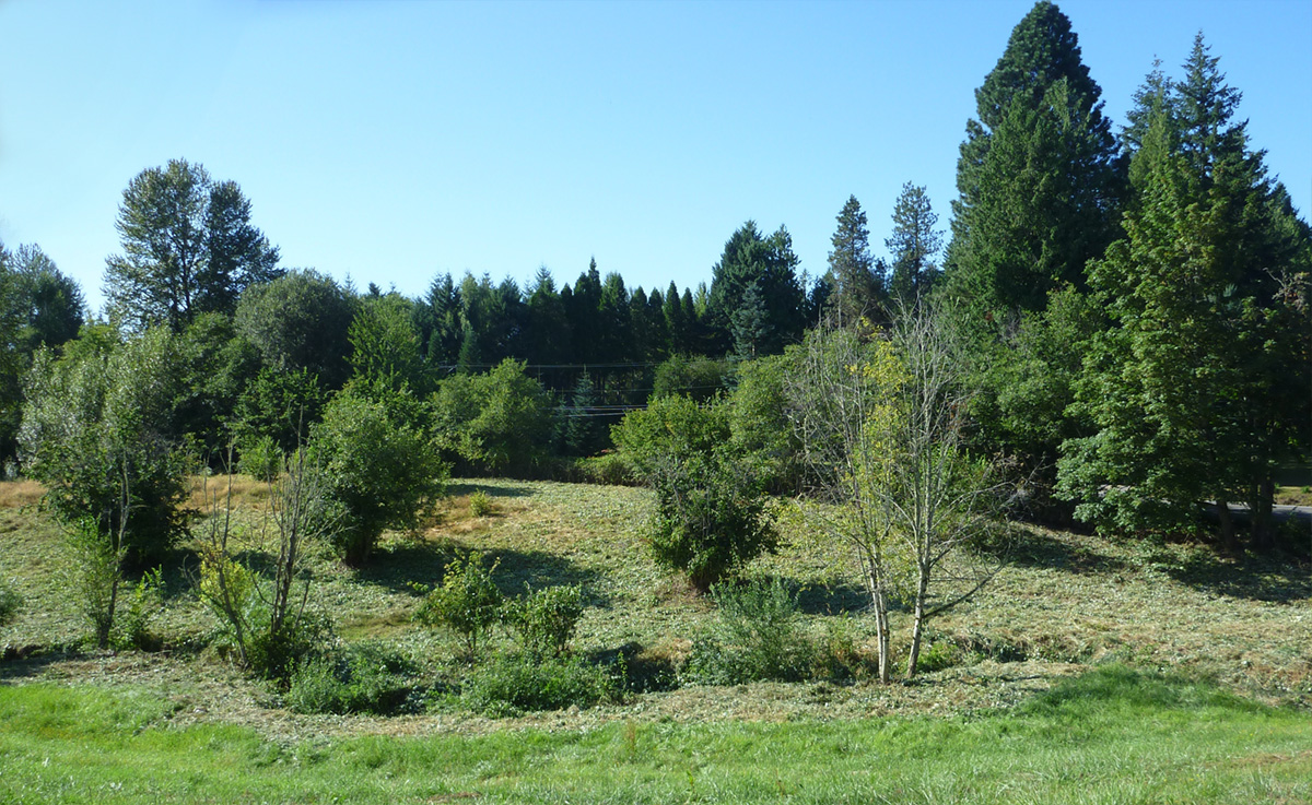 During restoration, weeds have been cleared.