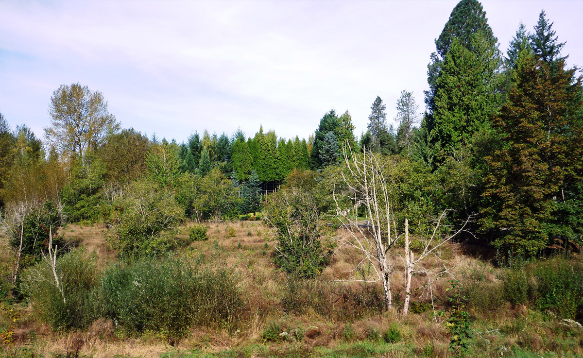 During restoration, area has been planted and is growing in.