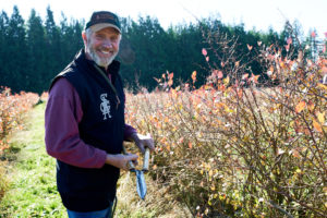 Pruning blueberry bushes at Gordon Creek Farm