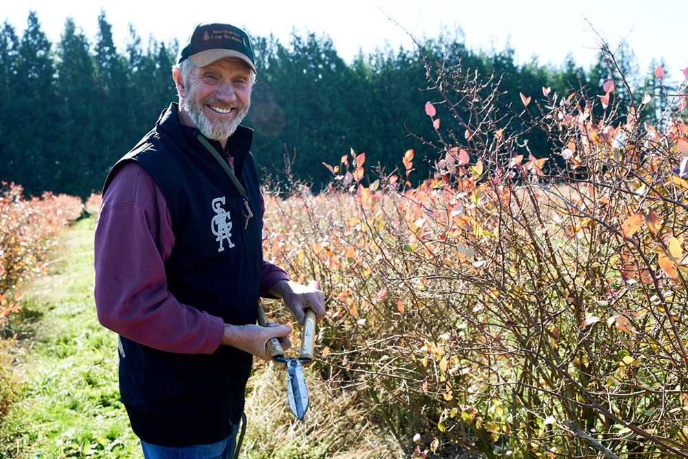 Pruning blueberry bushes at Gordon Creek Farm