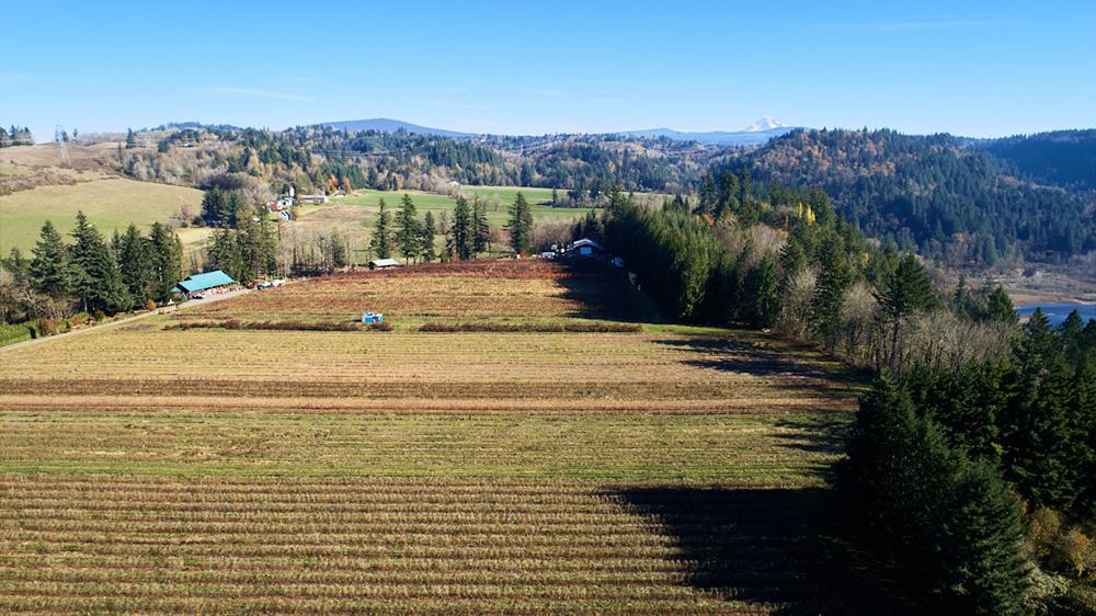 The fields at Gordon Creek