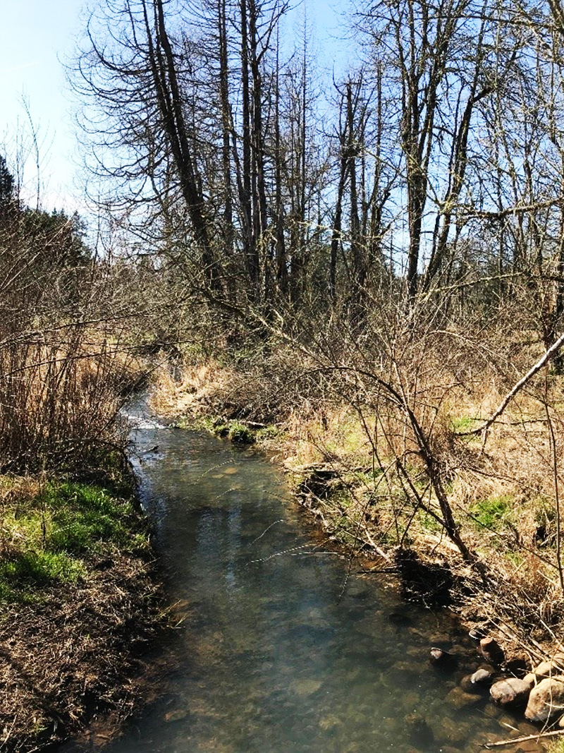 stream running through a vegetated area with trees in the near distance