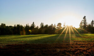 the sun rises over trees bordering a farm plot where grass seed is being grown. Clear sunburst lines are prominent from the sunrise