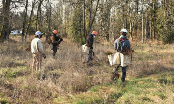 staff and contractors staking native plants at a site along Johnson Creek